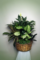 basket dish garden