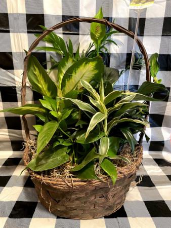 Basket Dish Garden Plant