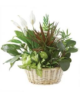 Basket Dishgarden
