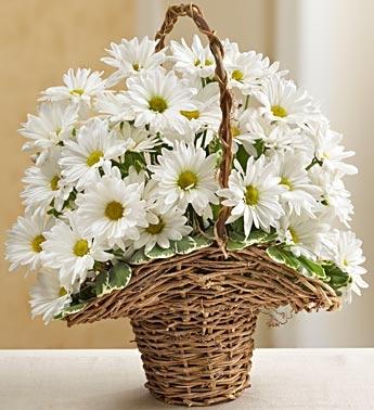 Basket full of Daisys