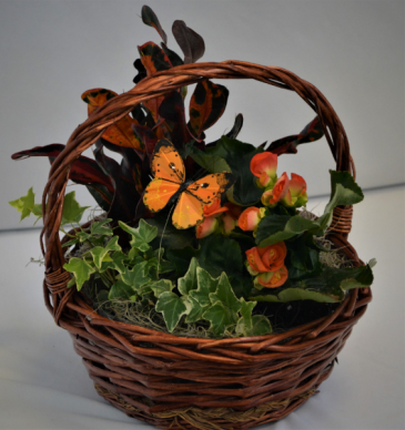 BASKET FULL OF NATURE PLANT BLOOMING BASKET