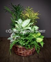 BASKET GARDEN  in Brattleboro, Vermont | George J. Brooks Florist LLC
