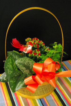 Basket Garden House plants in a basket