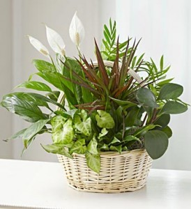 Stylish Basket Garden Planter  *** Call for Availability  ***
