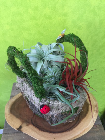 Basket of Air Plants.