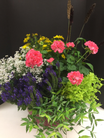 Basket of Annuals Plant