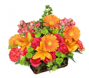 Basket of Bright Blooms basket arrangement in North Adams, MA | MOUNT WILLIAMS GREENHOUSES INC