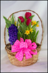 Basket of Bulbs  Plant