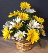 Basket of Daisy