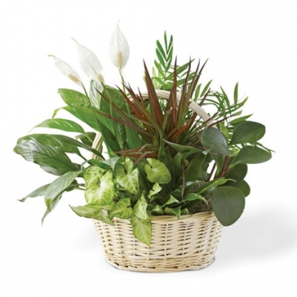 Basket of fun! dish garden