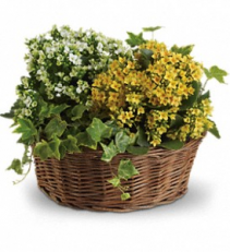 Basket of Joy plant