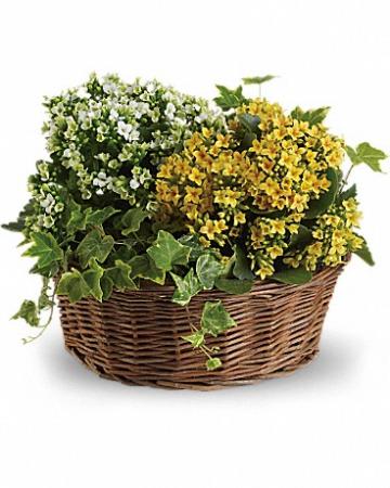 Basket of Joy T95-2