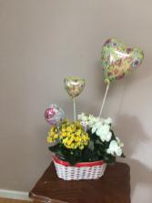 Basket of luv Blooming plant basket