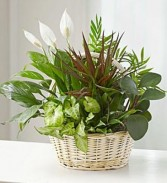 Basket of Mix Plants