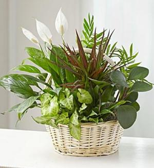 Basket of Mix Plants   in Bedford, NH | DIXIELAND FLORIST & GIFT SHOP INC.