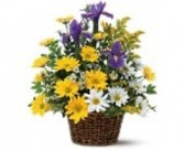 Basket of Spring Iris Bouquet Fresh Spring Flowers