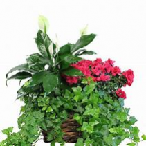 Basket of Treasures Mixed Plant Basket