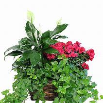Basket of Treasures Mixed Plant Basket
