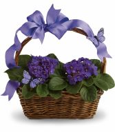 Basket of Violets African Violets in a variety of sizes & colors