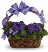 Basket of Violets Blooming Plant