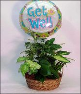 Plant Basket w/Get Well Mylar Balloon