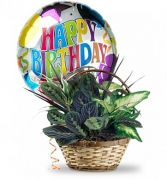 Plant Basket with Mylar Balloon $55.95, $65.95, $75.95