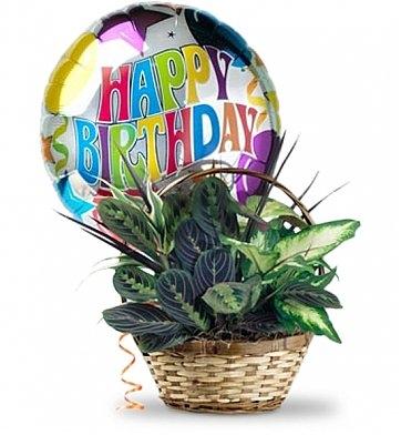 Plant Basket with Mylar Balloon 60.95, $70.95, $80.95