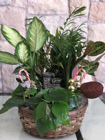 BASKET WITH MIX GREEN PLANTS AND FOUNTAIN