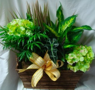 Basket with plants and silk flowers in it in oxford oh oxford basket with plants and silk flowers in it mightylinksfo