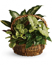 Basketgarden Living green plants in assorted rustic baskets, easy to maintain and a long living gift