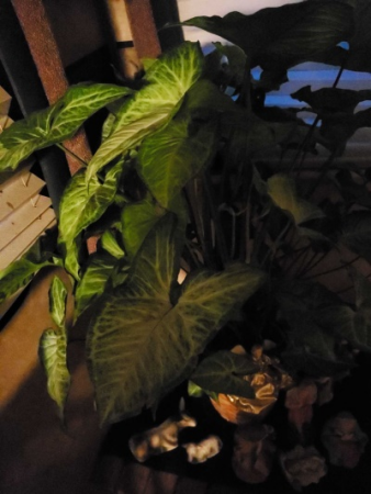 Bastrop Sas  Plant