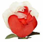 """""""Be Mine"""" Half Red half White Dozen Rose"""