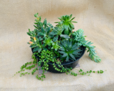 Bean Pot  Succulent Planter