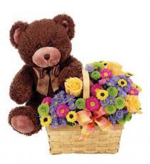 Beary Happy Birthday Item #BF159-11KM