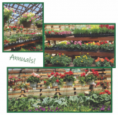 Beautiful Annuals are here!