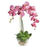 Beautiful Blooming Orchids Blooming Plant