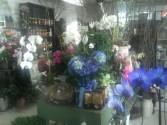BEAUTIFUL BLOOMING PLANTS SINGLE DOUBLE OR TRIPLE BASKET OF PLANTS