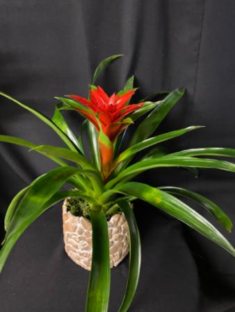 Beautiful Bromeliad