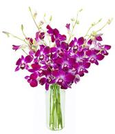 Dendrobium Simple Elegant Cut Orchids in a Vase