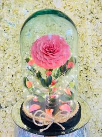 Beautiful eternal rose eternell led ligth rose  led ligth rose