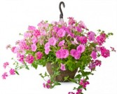 BEAUTIFUL FLOWERING BASKET