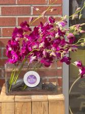 Beautiful Fuchsia Orchids in Modern Vase