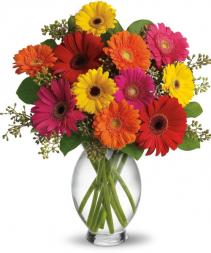 Beautiful Gerbers Vase Arrangement