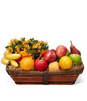 Beautiful Kalanchoe and Bountiful Fruit Basket gift basket