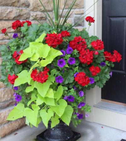 Beautiful large combo planters Outdoor arrangement