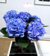 BEAUTIFUL MAJESTIC HYDRANGEA PLANT High Quality, Pure Elegance of Nature (Large)
