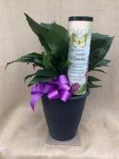 Beautiful Memories Peace Lily Plant