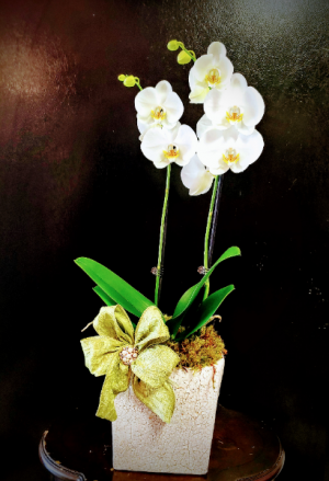 Beautiful Orchid  in Magnolia, TX | ANTIQUE ROSE FLORIST