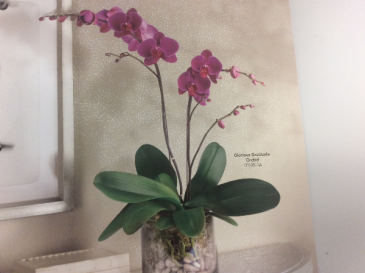 Beautiful Orchid  Orchid plant