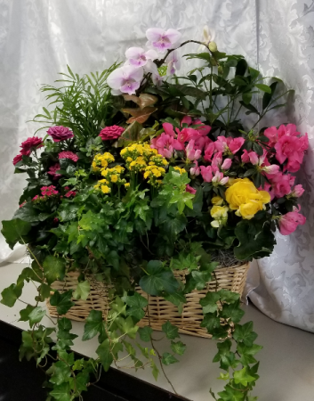 Living Beauty  Basket Dishgarden